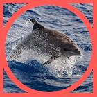 Orthem - Gestión Integral de la Biodiversidad