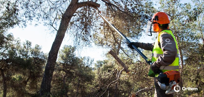 Los trabajos selvícolas de Orthem para la lucha contra el cambio climático